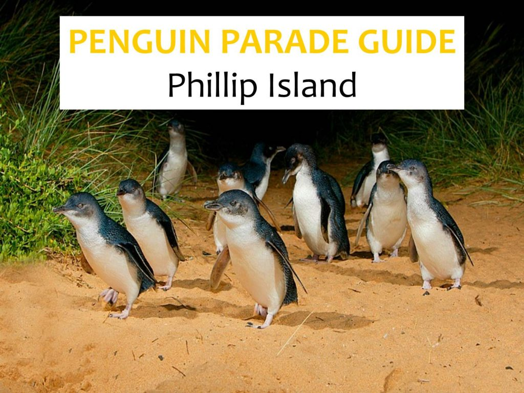 Penguin Parade tickets phillip island