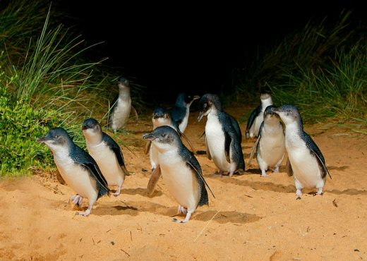 Penguin Plus or Underground Viewing or General Viewing